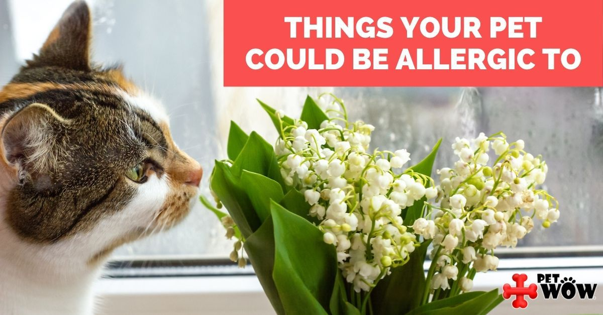 Things Your Pet Could Be Allergic To