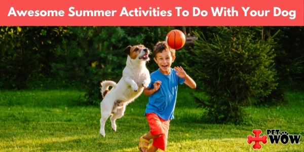 Awesome Summer Activities To Do With Your Dog
