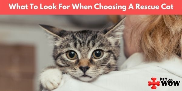 What To Look For When Choosing A Rescue Cat