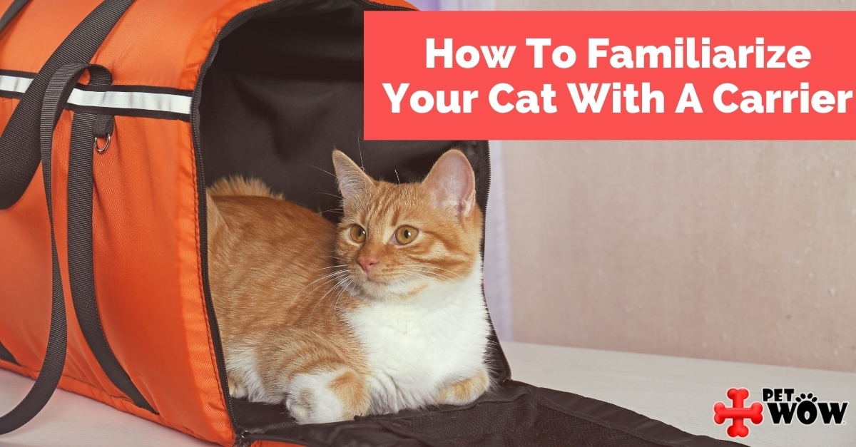 How To Familiarize Your Cat With A Carrier