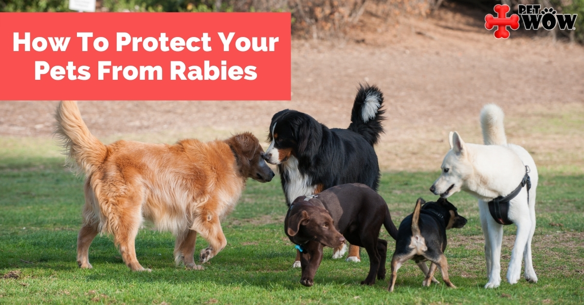 How To Protect Your Pet From Rabies