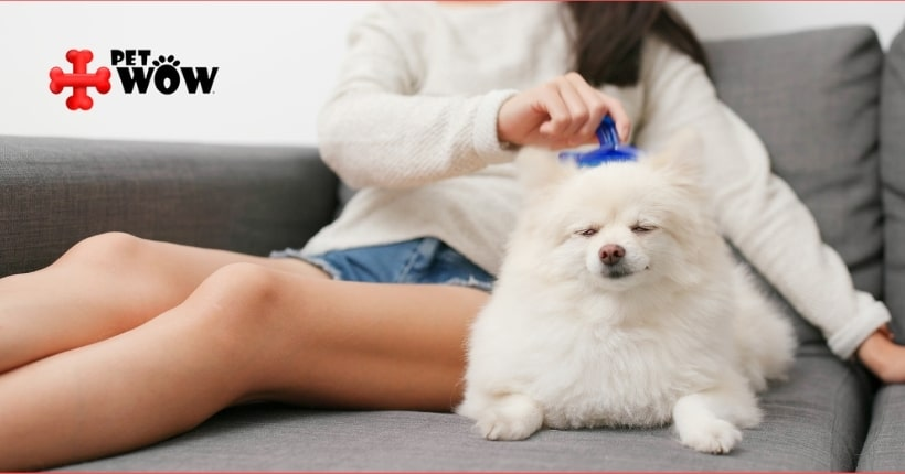 How To Care For Your Double-Coated Dog