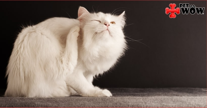 Does My Pet Need Year-Round Flea Prevention?