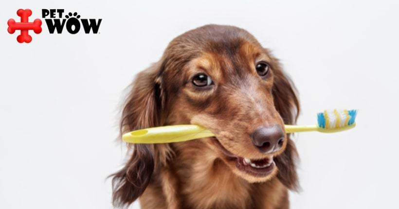 Importance Of Dental Cleaning For Your Pets