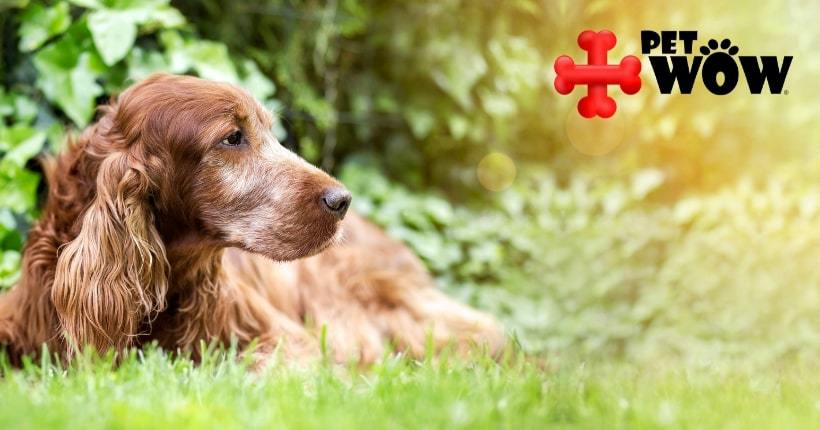 4 Reasons To Adopt A Senior Dog