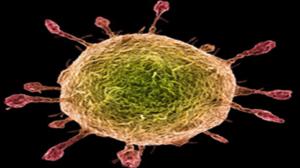 Covid 19 single cell