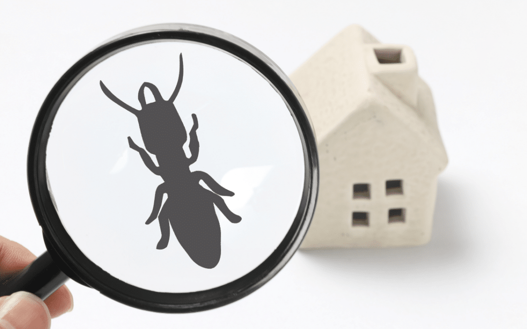 Reader Questions – Who Handles Those Termites?