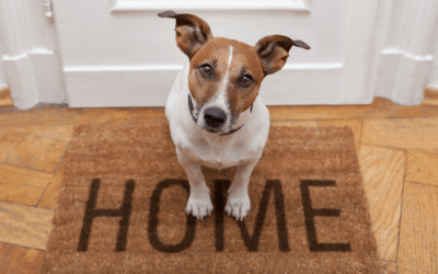 Reader Question – HOAs and Pets