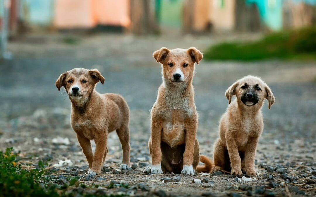 Boards Barking About Dogs