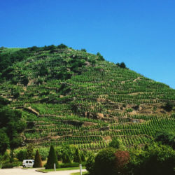 vidal-fleury-winery-rhone-alps-france