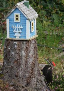 littlehouse-woodpecker