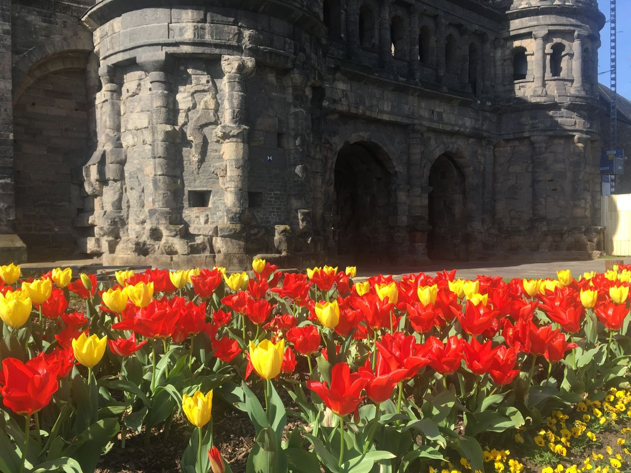 Tulips at the Porta Nigra in Trier, Germany