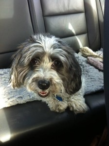 Dog in car.