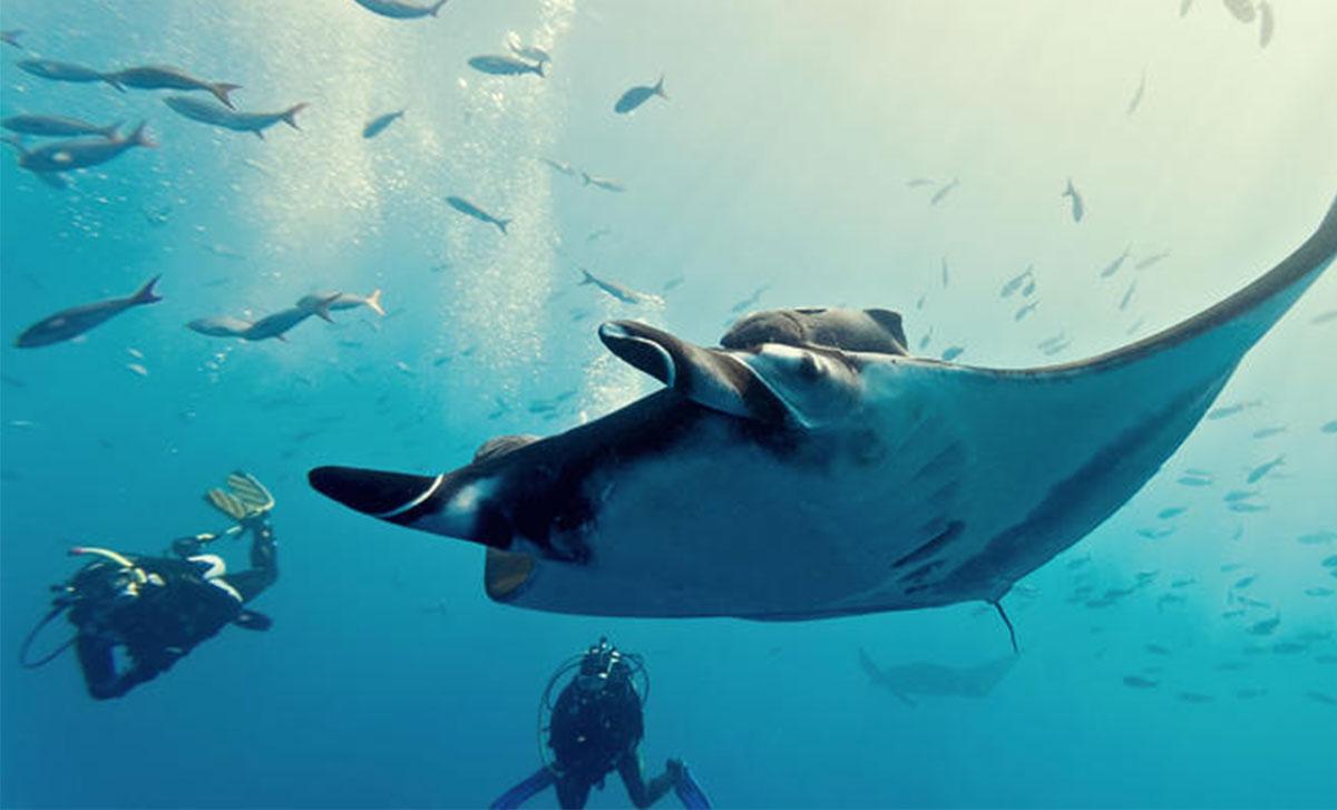 manta-rays-001