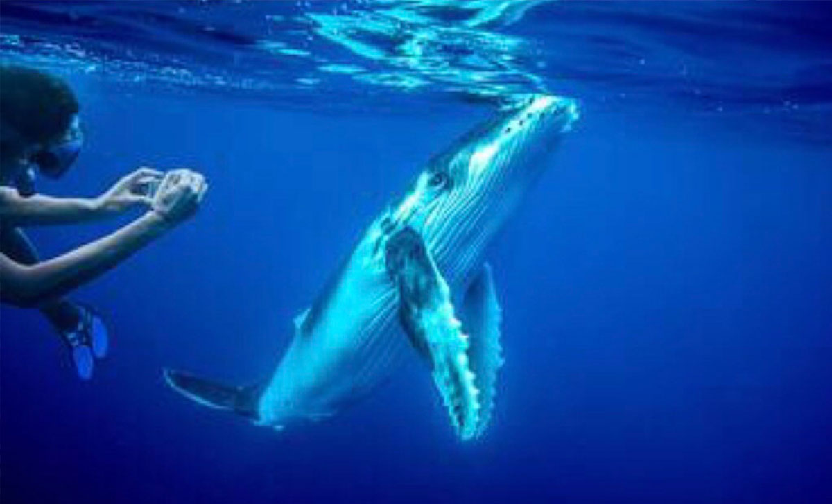 swim-with-blue-whales