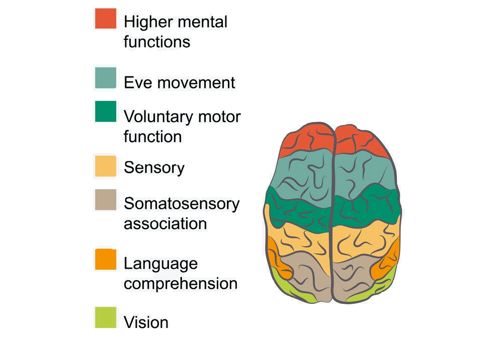 different brain functions