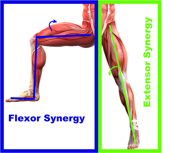 abnormal muscle synergy