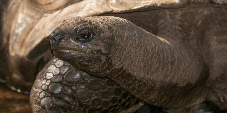 Gopher-tortoise Wildlife at Silver Spring
