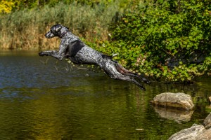 Jumping Dog