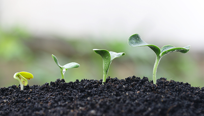 Seeds of family resilience: Focus on rewards