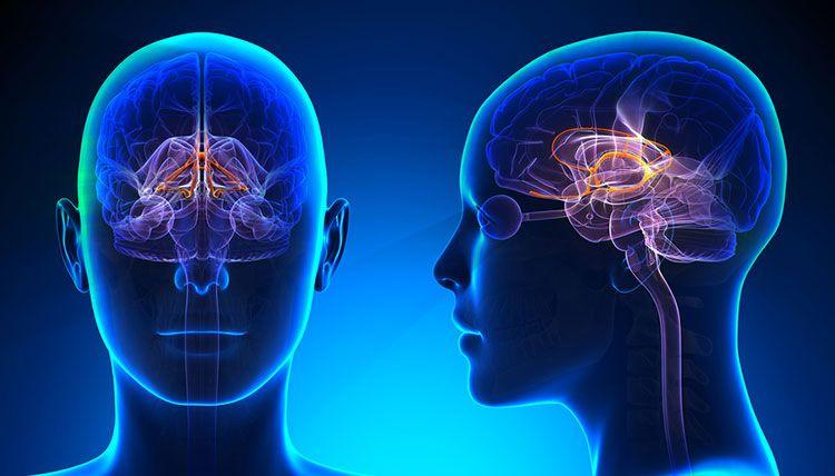 Que es el tumor cerebral, causas y como diagnosticarlo