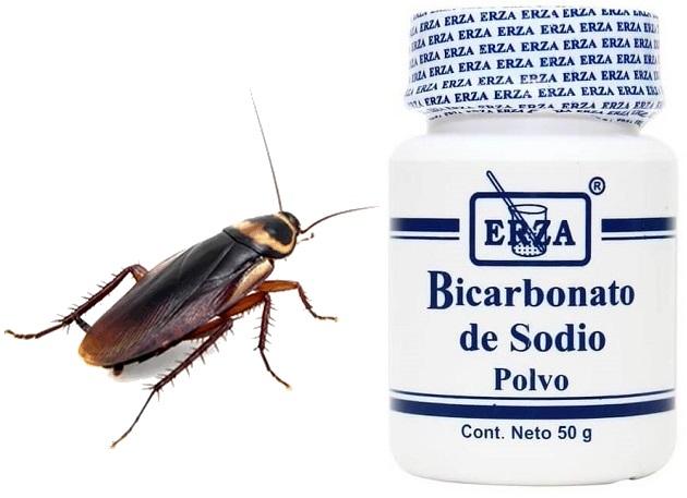 Cómo eliminar definitivamente las cucarachas con bicarbonato y azúcar