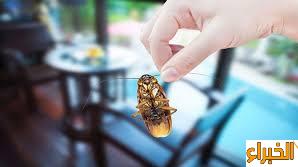 نصائح مكافحة الحشرات