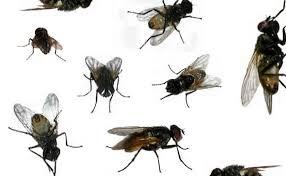 كيفية طرد الحشرات الطائرة من المنزل
