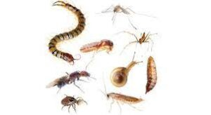 الخشرات الزواحف