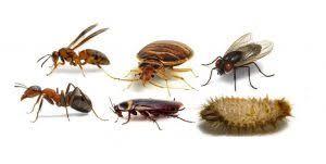 الخشرات