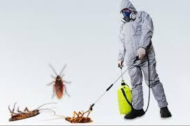 شركة رش مبيدات بالرياض والقضاء عليها تماما