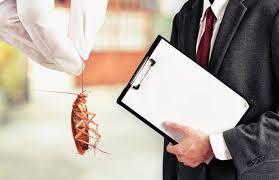 رش المبيدات الحشرية