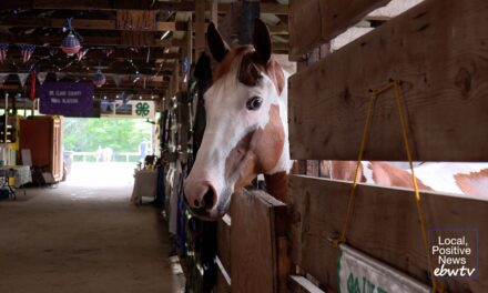 4-H Fair returns to Goodells County Park with new show