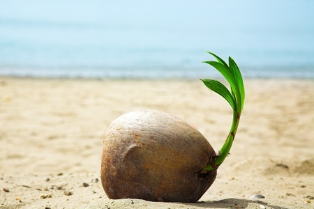 The Health Benefits of Coconut in Your Diet