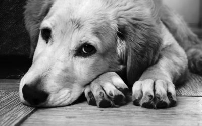 Common Summer Skin Problems in Dogs