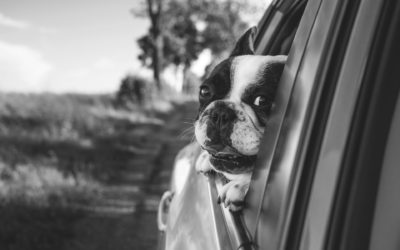 Leaving Dogs in Parked Cars is Dangerous