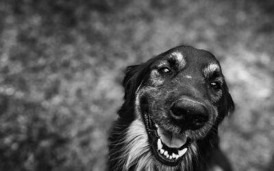 Garden Perils for Pets