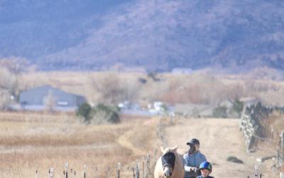 Child Beginner Horsemanship Classes