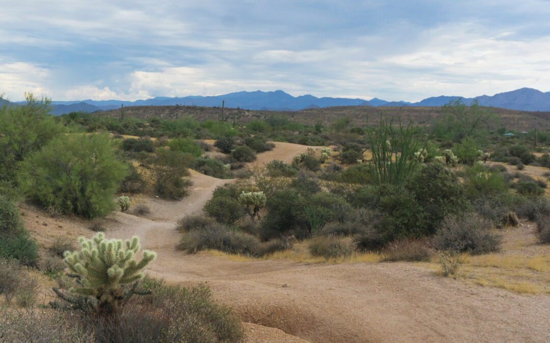 McDowell Mountain Regional Park: A Personal Story