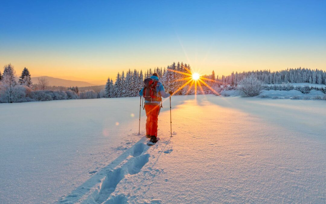 Snowshoeing In Colorado Springs: Our 5 Favorite Trails