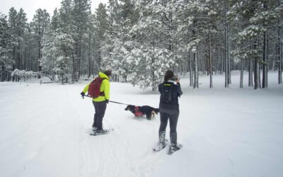 Arizona Nordic Village: A Guide and Review