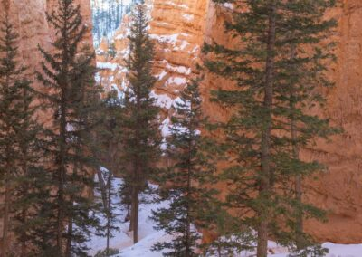 Snowshoers in the canyon.