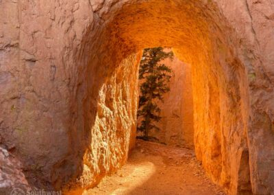 A hiking tunnel.