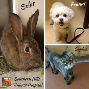 Southern Hills Animal Hospital