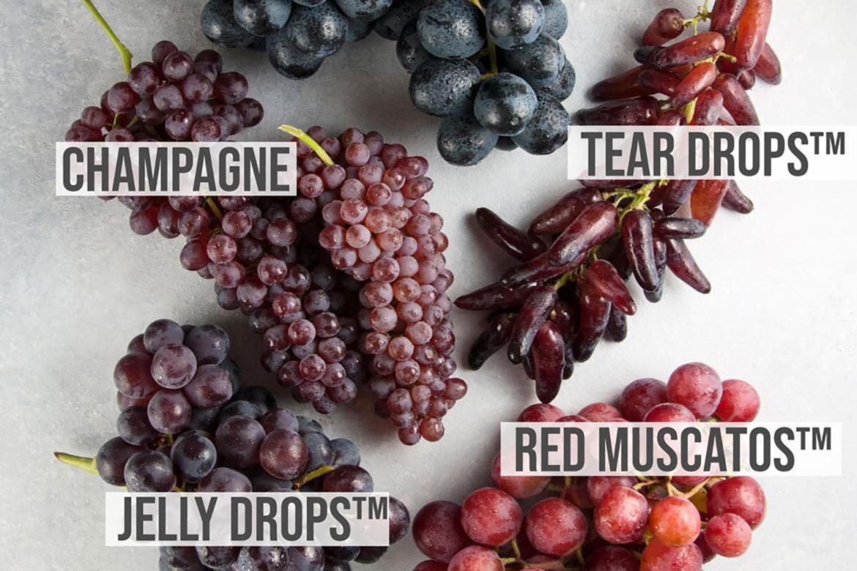 葡萄品种的视觉指导