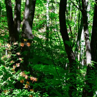 The Huntley is Surrounded by Private Woods - The Cove at Fairview Vacation Rentals - Asheville NC