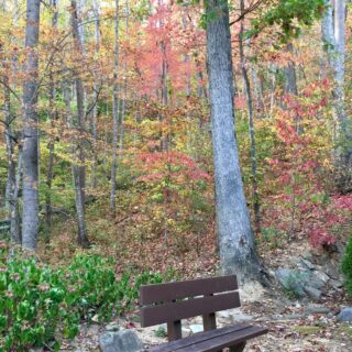 Place to sit and enjoy the Fall at My Place - The Cove at Fairview - Vacation Rentals- Asheville, North Carolina