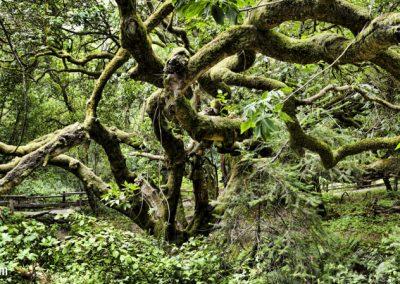 Moss tree_Panorama38-40