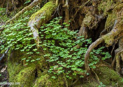 Muir Woods_1336