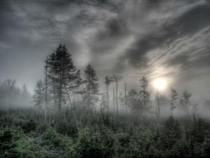 1024_haze_forest_wallpaper